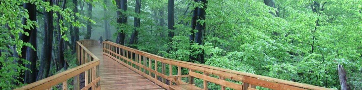 Regnfuld skov